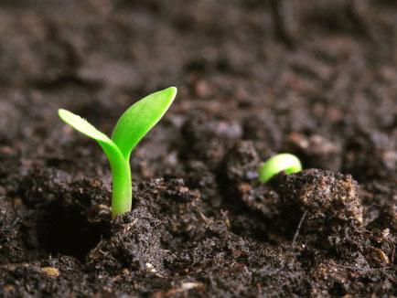 土壤修复/调理剂的生产